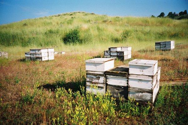 INVITATION à l'installation de ruches à l'hôtel La Croix de Savoie pour la Biodiversité