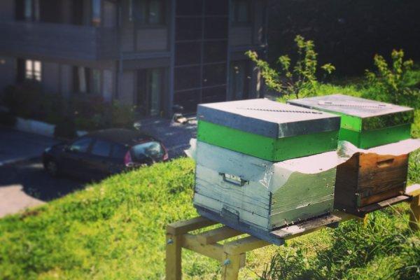 Les abeilles ont choisies le Restaurant La Croix de Savoie aux Carroz pour l'été en Haute-Savoie