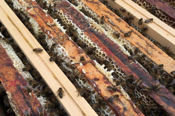 Visite ce jour du rucher de l'hôtel La Croix de Savoie aux Carroz