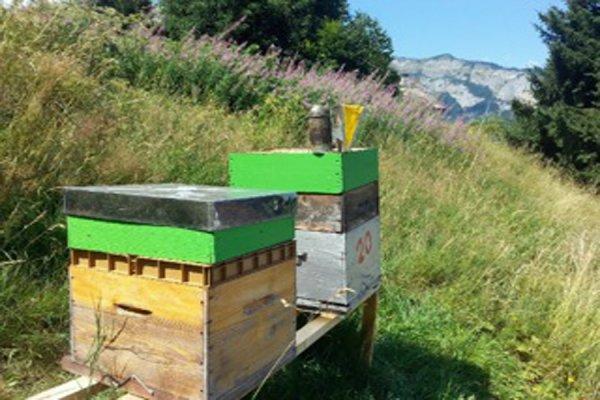 Les abeilles de l'hôtel et restaurant La Croix de Savoie font le SHOW sur Radio Mont-Blanc