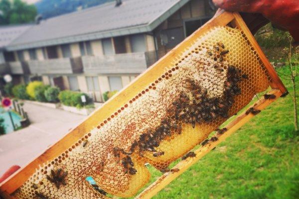 Visite du rucher de l'hôtel & du restaurant La Croix de Savoie